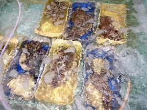 シャコ貝もいっぱい