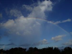 朝に出た虹